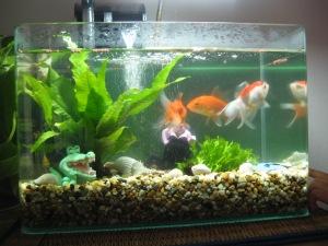 Fish tank 003